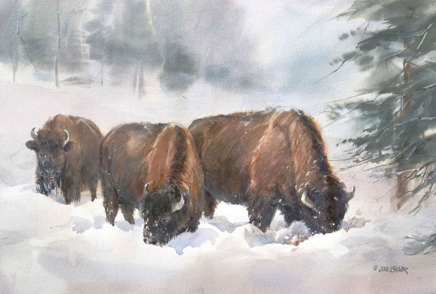 yellowstone-bison-jane-coleman