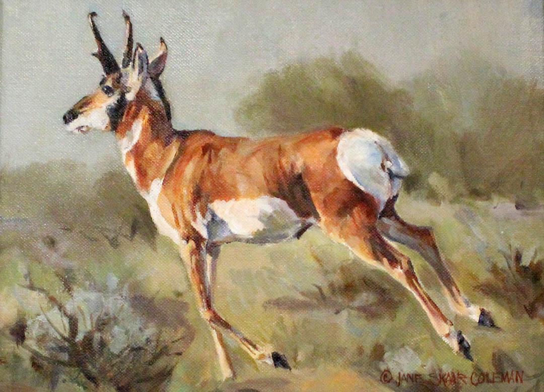 Jane Coleman Wyoming Pronghorn 9×12